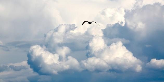 bird-1022937_1280